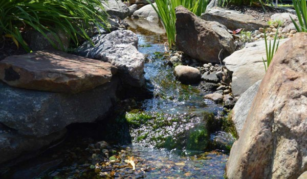 Pond & Water Features (10)