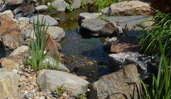 Pond & Water Features (9)